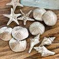 Set of 24 Assorted Silver Mini Seashells