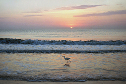 Egret at Sunrise Giclee
