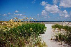 Sea Oats, Sand and Surf Giclee