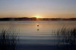 Sunrise Flight Giclee