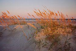 Sunset Sea Oats Giclee