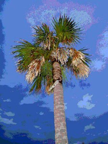 Bright Palm Print