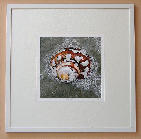 Sea Snail Giclee