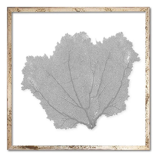 Classic Sea Fan Beach Wall Art - Harbor Gray