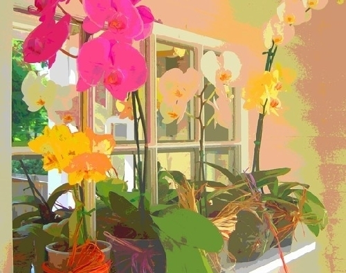 Orchids from Reed Print