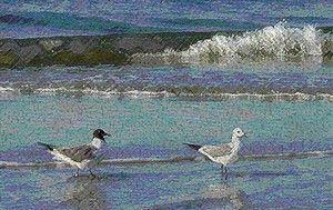 Gull Talk Print