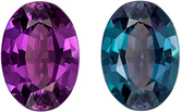 Gubelin Certified Genuine Loose Alexandrite Gem in Oval Cut, 7.01 x 4.98 x 2.97 mm, Color Change Vivid Teal to Rich Eggplant, 0.81 carats