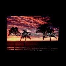 Rosco iPro Slide Palm Trees P7880