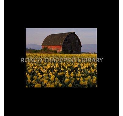 Rosco iPro Slide Barn P0863