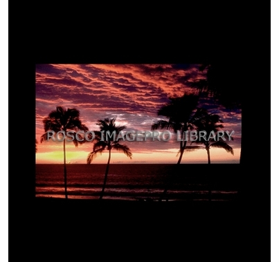 Rosco iPro Slide Palm Trees P7880